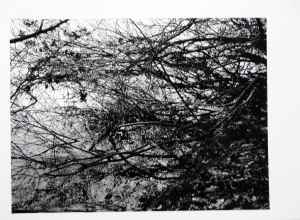 screen print other reflection 1