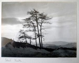 Trees School Knott c 1960